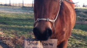 Horse Shaming at its Best 001