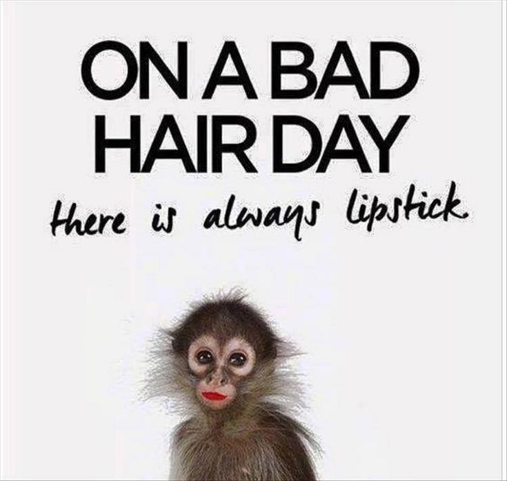 Funny Tuesday Quotes #tuesday #quote #memes - Fit for Fun