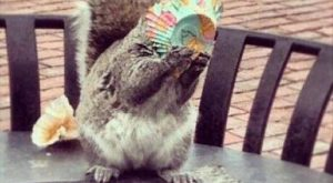 funny caption squirrel eating cupcake this is the best day of my life