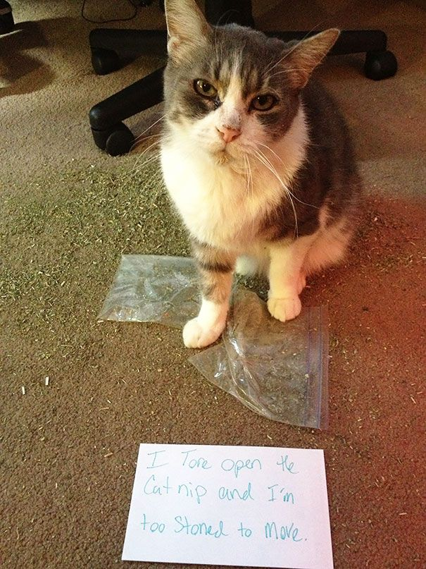 These 25 Cats Are The Worst Cats In The World. I Can't Stop Laughing…