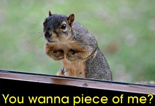 Funny Squirrel Pictures Animal | … Funny Squirrel Pictures With Captions – Images -…