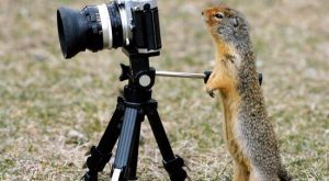 "Funny Squirrels #squirrel explore Pinterest""> #squirrel #caption explore Pinterest""> #caption #fun explore Pinterest""> #fun…"