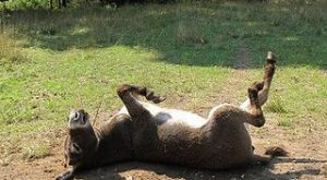 Tuesday dose of donkey cute by Farmgirl Susan, via Flickr
