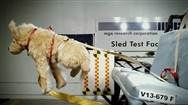Most safety restraints for pets in cars fail crash tests