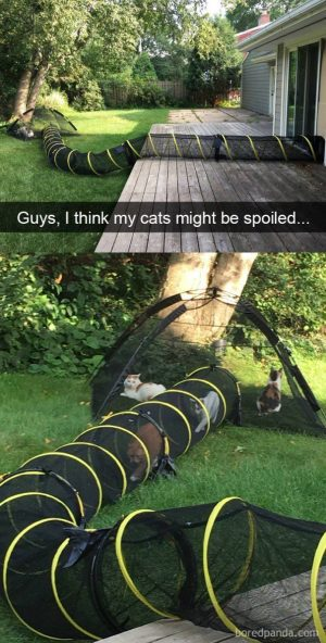 Funny Cat Snapchats Spoiled? Yup & I LOVE it! Can I meet you? :-)…