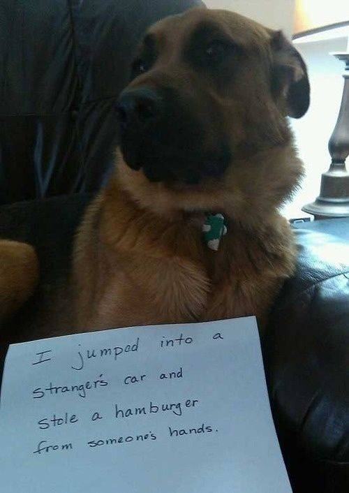 This hamburger thief dog. | 29 Dogs You Won't Believe Actually Exist
