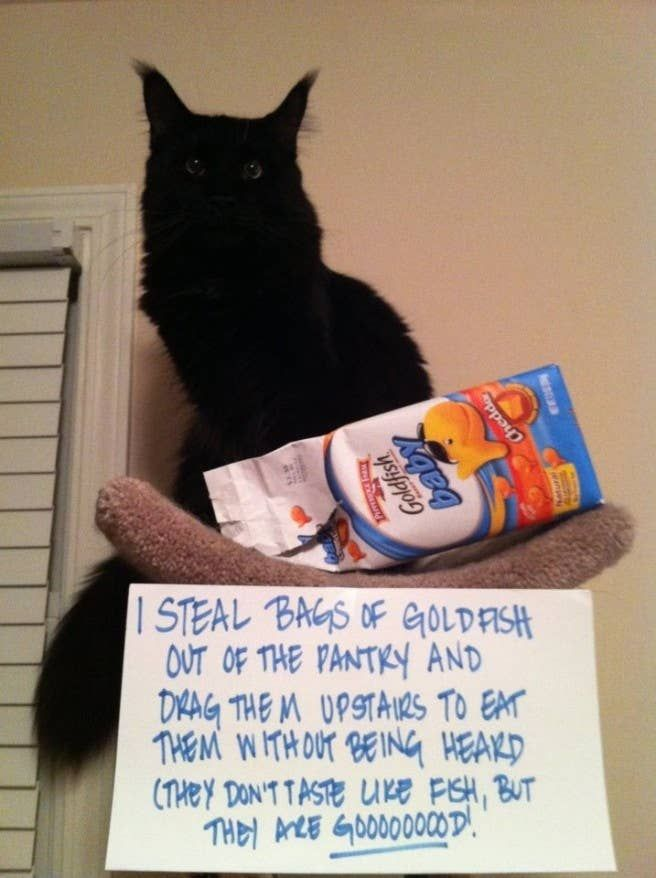 Cat-Shaming At Its Best