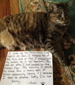 25 pictures of cat shaming – CatTime