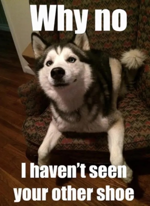16 Best Siberian Husky Memes of All Time – Dog Red Line