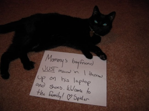 41 Hilarious Cat Shaming Pictures of Guilty Kitties