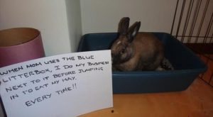 After Dog and Cat Shaming We Present You Bunny Shaming (16 Pics)