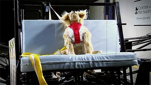 Pet owner alert: Most restraints for pets in cars fail crash tests