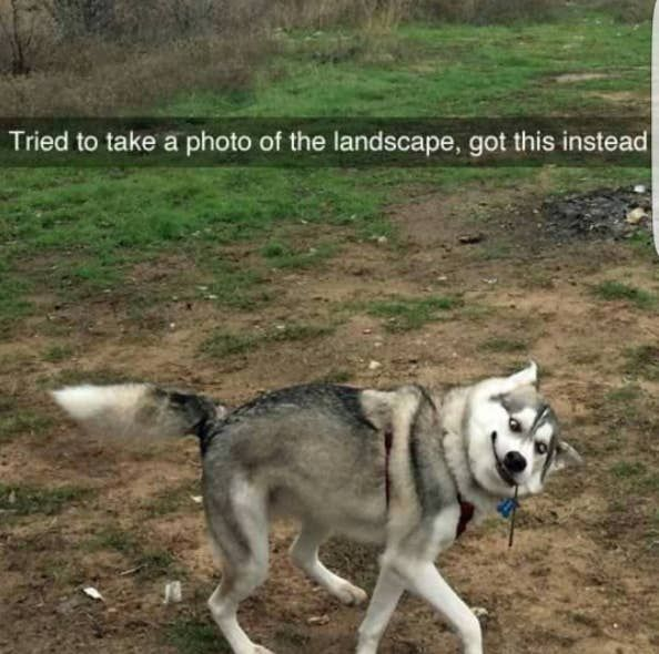 Dare You Not To Laugh At These 23 Animal Memes