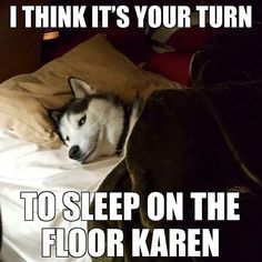 18 Ways of Telling You How to Avoid The Siberian Husky and Horrendous Life