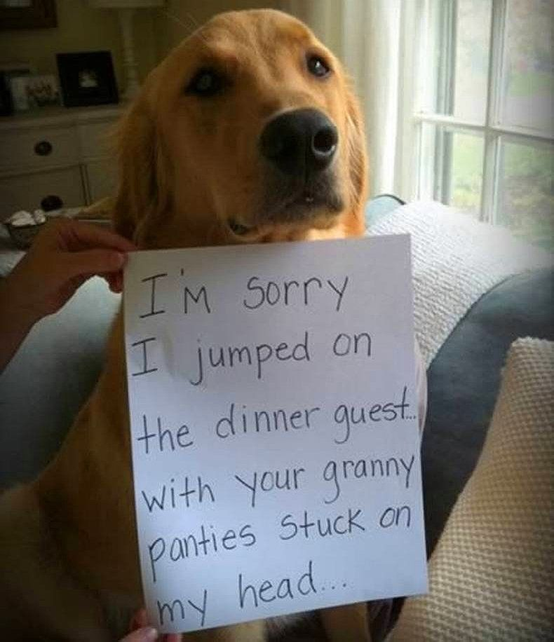 25 pictures of public dog shaming | Dogtime