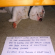 11 Dogs of Dog Shaming Who Think They Are Masters Of Escape – BarkPost
