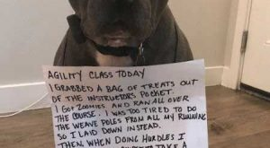 dogs pooping signs of shame are also the best of dog shaming. #funny #dogs
