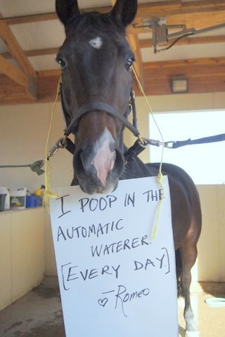 36 Hilarious Shamed Animal Pics –