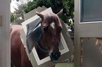 This Horse Is Very Sorry