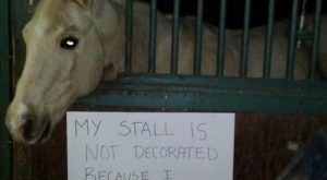 Horses Who Are Very Ashamed Of What They Did! (Not Really),  #Ashamed #Equitationdrole #horse…
