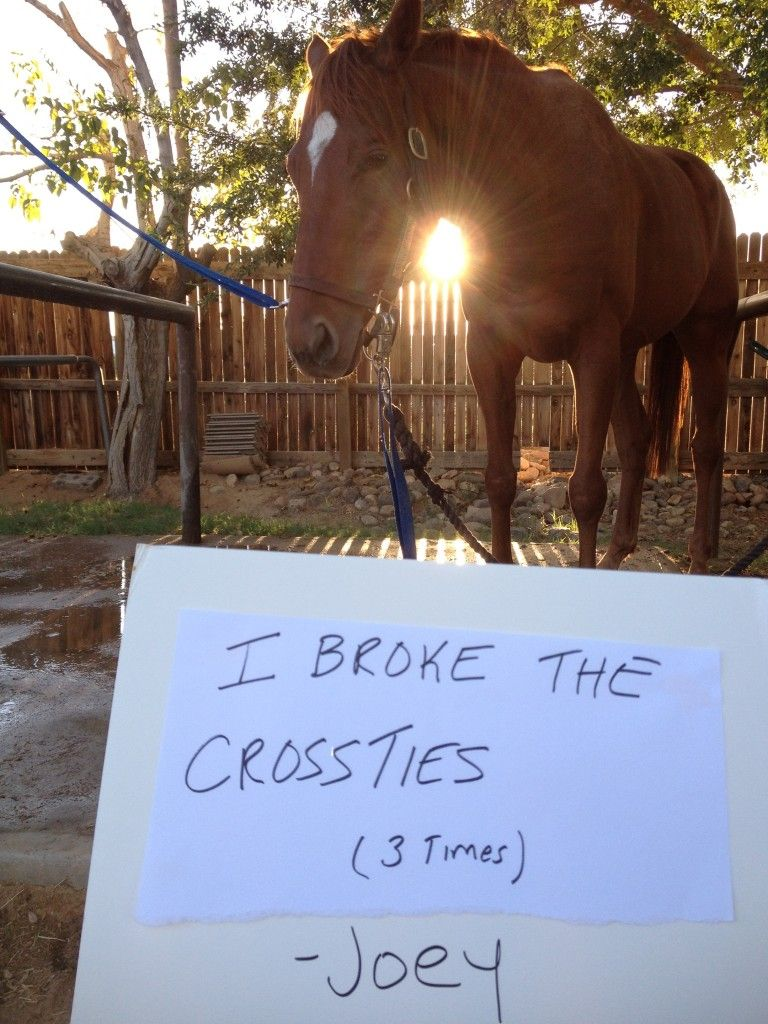 Clearly these horses just couldn't help their naughty behavior, and these horse shaming photos…