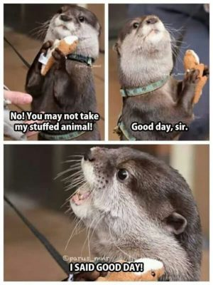 It's Ferret Day So We Thought You Might Enjoy These Funny Memes – I…
