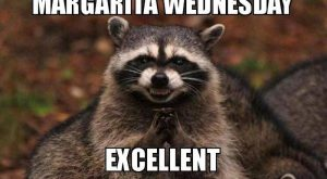 "15 Funny Wednesday Memes – ""Margarita Wednesday. Excellent."""