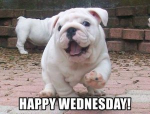 Happy Wednesday Memes to Post to Social Media