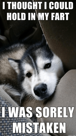 50+ Funny Husky Memes That Will Keep You Laughing For Hours #husky #huskymemes #dogmemes #memes #fun