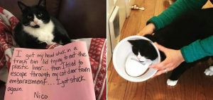 Shame on Meow; Cats That Are In Need Of Some Shaming