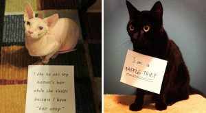 Cat Shaming: Rank These 52 Cats Getting Hilariously Roasted for Their Crimes