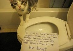 33 Times Owners Shamed Their Cats – I Can Has Cheezburger? – Funny Cats…