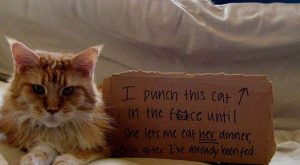 These Cat Shaming Moments Will Crack You Up!