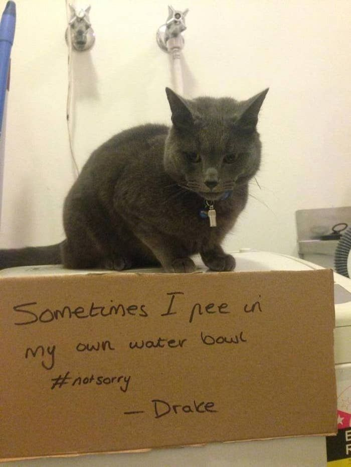 It's all love until they shit on your pillow. H/T: Cat-Shaming and Cat Shaming…