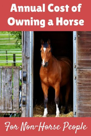 Many horse crazy girls dream of one day owning their horse or pony. But…