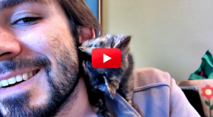 This Kitten Is The Cutest! Watch Her Give Her Owner Sweet Kitty Kisses |…