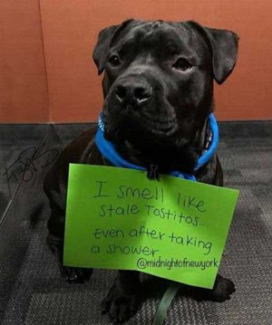 21 Bad Dogs Create Some of the Best Dog Shaming Pics! |Barking Laughs