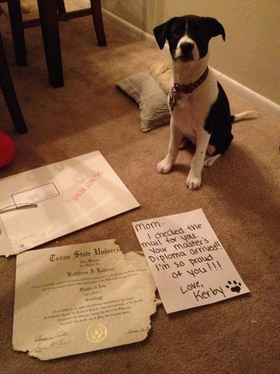 30+ Hilariously Perfect Examples Of Dog Shaming – Memebase – Funny Memes