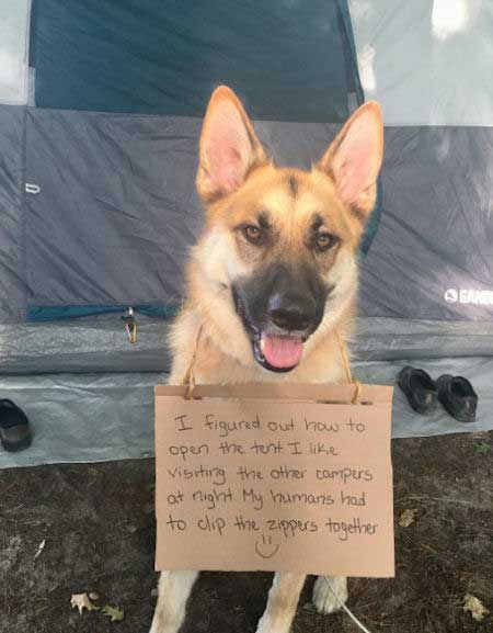 20 Funny Dog Shaming Pictures with the Bad Dog | Barking Laughs