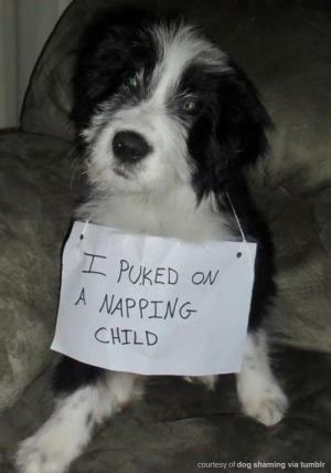 17 All New Photos Of Parents Shaming Their Pets – I Can Has Cheezburger?