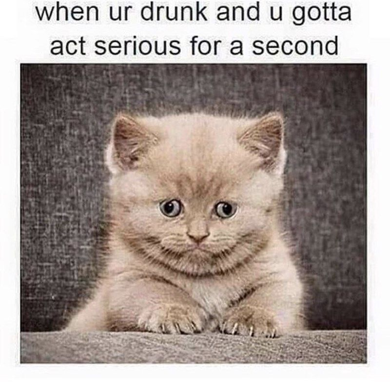 thirsty thursday meme of a kitten and comparing it to trying to act normal…
