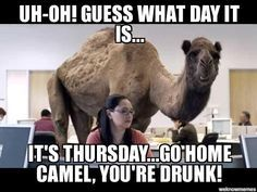 Uh-oh! Guess what day it is… It's Thursday… Go home camel, you're drunk! Dank Thursday Meme