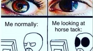 No shame #horse #horses #pony #quotesofinstagram #instaquotes