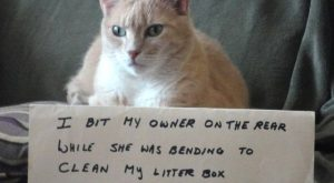 25 pictures of cat shaming | CatTime