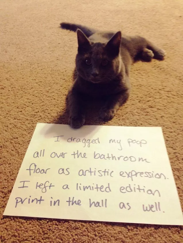 26 Pictures That Prove Cats Are Actually Assholes