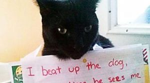 80 Hilarious Cat Shaming Moments