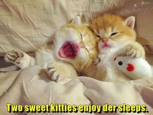 Two sweet kitties enjoy der sleeps