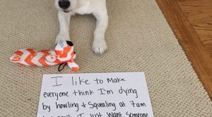 30 Of the Best Dog Shaming Photos From 2017 – I Can Has Cheezburger?