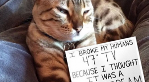 Cat-Shaming : Photo