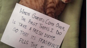 35 Pets Who Were Shamed For Their Hilarious Failures – FAIL Blog – Funny…